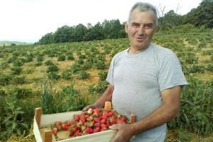 Ilija-Kovacevic-u-svom-jagodnjaku-foto-Milan-Pilipovic