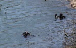 Vrbas-ronioci-potraga-rijeka