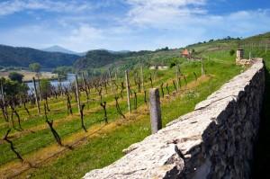 vinice, Velke Zernoseky, Porta Bohemica, Ceske Stredohori, Ceska republika