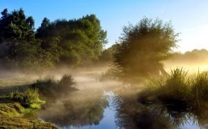 Fog-in-the-morning