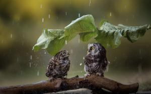 thumb2-owl-rain-wildlife-funny-birds-predatory-bird