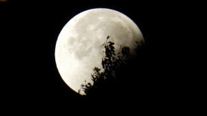 moon-961850_1280
