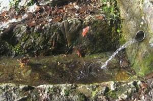 muska-voda-Konjuh-Foto-bh-index-com