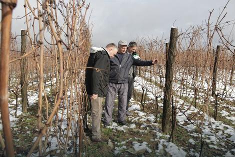 Opština Laktaši podstiče vinogradarstvo: BESPLATNE sadnice za nove vinograde