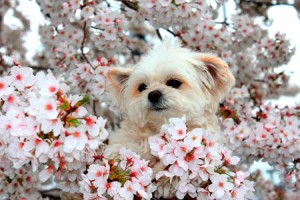 230093212-spring-dog-wallpaper