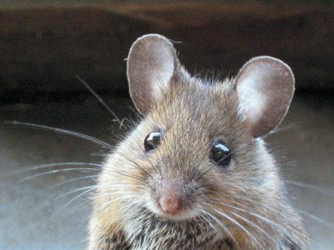 """""""Droge nema, pojeli je miševi"""""""
