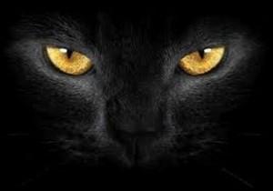 crna-mačka-640x480