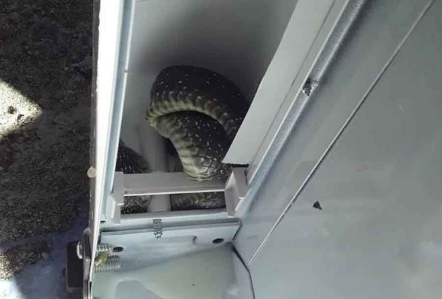 trebinje-frižider-zmija